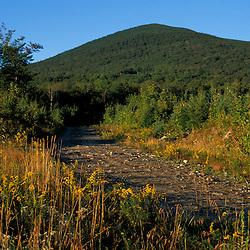 A logging road near Mt. Abraham. Kingfield, ME.