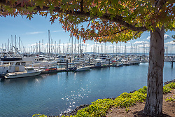 United States, Washington, Seattle, boats at Elliott Bay Marina, and fall foliage