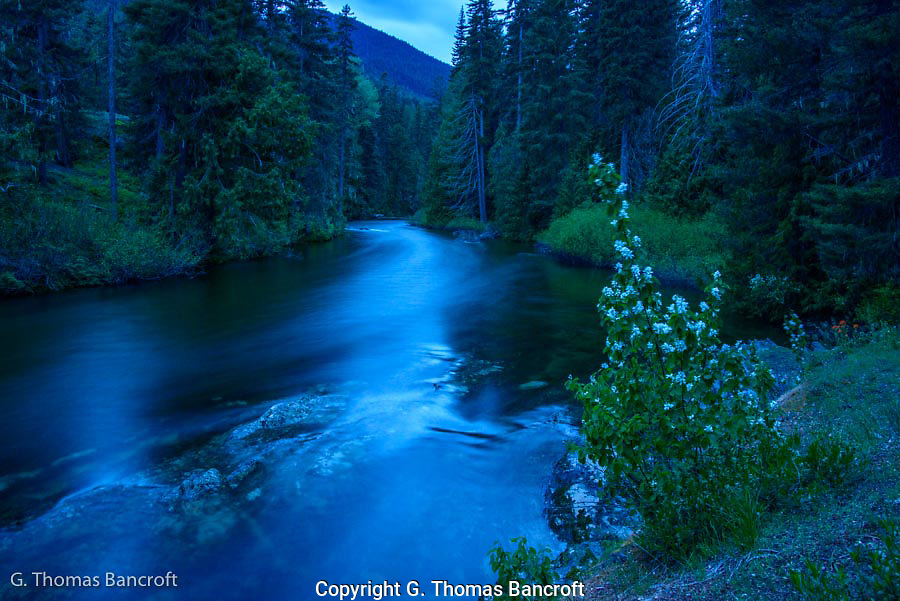 The light turned blue as twilight moved across the landscape.  The western serviceberry glowed in the foreground and the creek became soft with the blur created by a slow shutter speed.  I found it a very relaxing scene to sit for a while.