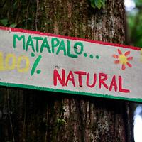 Central America, Costa Rica, Matapalo. 100% Natural.
