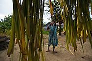 Ni Vanuatu woman hanging pam leaves which will be used for mat weaving. Uleveo, Maskelyne Island, Malampa Province, Malekula, Vanuatu