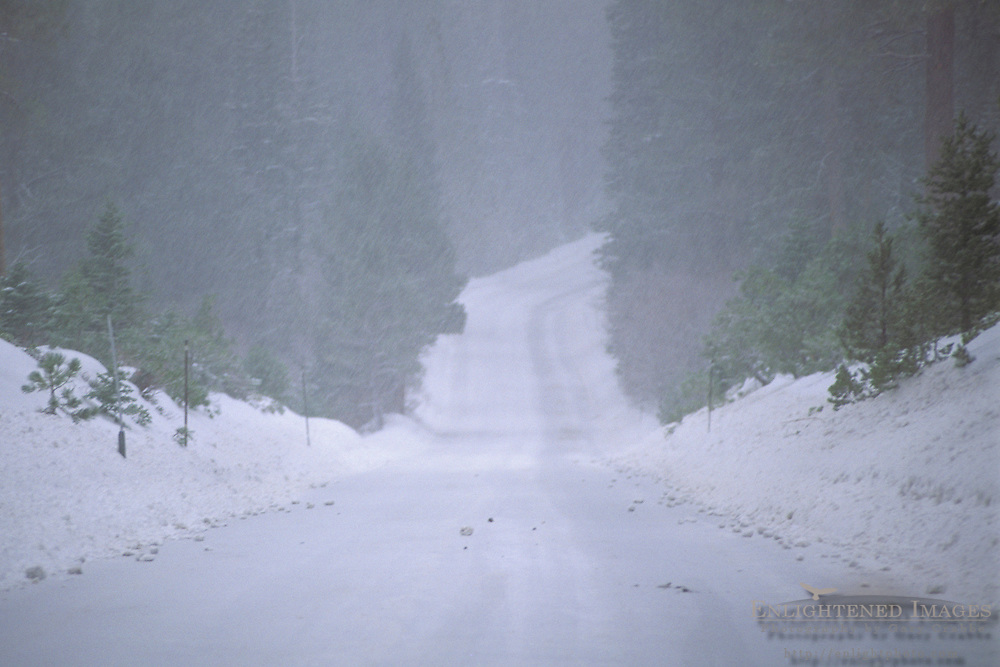 Road in winter snowstorm, Tahoe National Forest, near Lake Tahoe, California