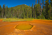 The Paint Pots where iron-rich mineral springs stain the surrounding earth a vibrant ochre colour. CAnadian Rocky Mountains<br />