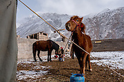 Horses feed in the early morning in Zado, Tibet (Qinghai, China)