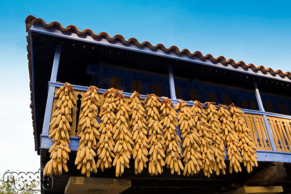 Corn cobs dry on balcony in Asturias Spain