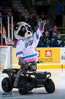 KELOWNA, CANADA - JANUARY 29: Rocky Raccoon, the mascot of the Kelowna Rockets on January 29, 2016 at Prospera Place in Kelowna, British Columbia, Canada.  (Photo by Marissa Baecker/Shoot the Breeze)  *** Local Caption *** Rocky;