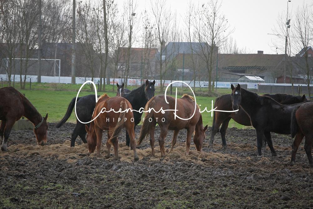 De Craene Tom<br /> Fokkerij van den Bisschop -  2009<br /> Photo &copy; Dirk Caremans