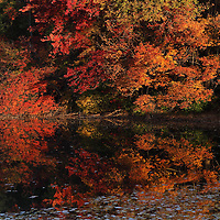 The New England fall foliage attracts leaf peepers from around the world. Locals and travelers from far away flock to Maine, New Hampshire, Vermont, Massachusetts, Connecticut and Rhode Island to get a glimpse of the colorful display of trees. Leaf peeping is an annual New England must do and personally I look forward to it all year. Early morning, when the sun paints the fall foliage in warm hues, is my preferred time to explore magic of nature. Nearby Southborough in Worcester County with it's beautiful lakes makes for quick outings and beautiful viewing of colorful fall foliage. Last week autumn colors were peaking which made for a perfect autumn scenery and fall foliage reflection.  <br />