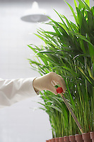 Scientist conducting test on plants