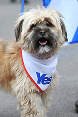 SEPT 17 2014 Scottish independence: Yes campaigners stage Glasgow rally
