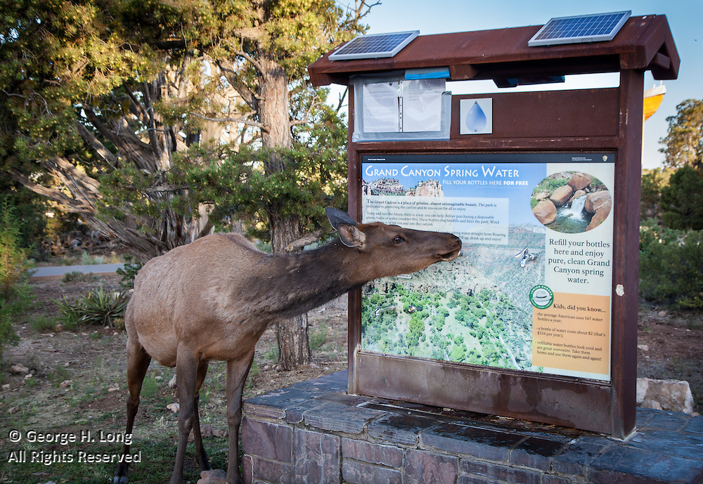 Elk wants Grand Canyon spring water from spigot at South Rim