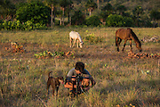 Saddle Mountain Ranch<br /> Savanna <br /> Rurununi<br /> GUYANA<br /> South America,<br /> cattle<br /> Zach Montes
