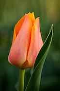 20140425 spring blooms