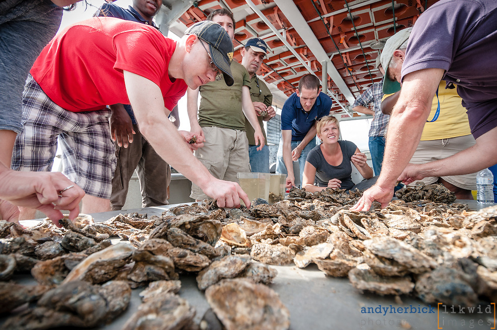AUGUST 16, 2013 - Annapolis, MD, USA - An excursion up the Severn River and into Chesapeake Bay with students and faculty from Johns Hopkins and Howard Universities as part of the WCH IGERT. - IMAGE © 2013 Andy Herbick | www.andyherbickphotography.com - ALL RIGHTS RESERVED.