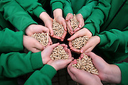 Pupils from Mornington primary school with wood pellets for their wood burning stove. The school is part of Nottinghamshire County Council who won the 2007 UK Ashden Award. The Ashden Awards for sustainable energy recognises projects finding ways to cut carbon dioxide emissions.