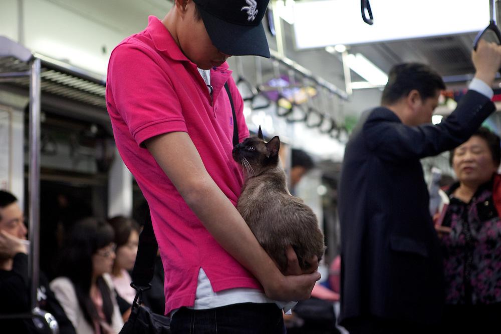 Junger Mann und Katze reisen zusammen mit der Metro in Seoul im Zentrum der koreanischen Metropole.<br /> <br /> Young man travelling with his cat with the Seoul subway in the center of the Korean metropolis.