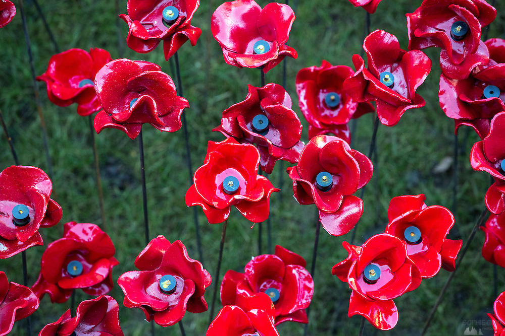 Detail of the wonderful display in the Tower of London moat - filled with nearly 900,000 poppies to mark the centenary of the start of WWI.