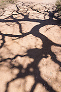 Branches cast shadows on a dirt road/trail at Enchanted Rock State Natural Area, Fredericksburg, Texas, USA.