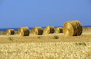Wheat fields after grain harvest bales of straw ready for collection. Photographed in the Jezreel valley, Israel