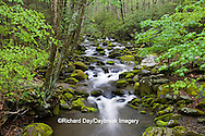 66745-04403 Roaring Fork in spring along Roaring Fork Motor Trail, Great Smoky Mountains National Park, TN