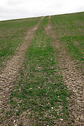 tractor tracks imprint on the soil of a agricultural field