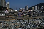 Hong Kong. fishermen  drying fish  Aberdeen       /  pêcheurs et séchage poissons  /  Ap lei Chau autrefois une île déserte est devenue en quelques années l'ile des HLM, relié aujourd'hui à l'ile Victoria par un pont, on y a relogé les pécheurs qui vivaient sur les jonques, les terrains ont été récupérés sur la mer , et la bais d'Aberdeen est réduite à un bras d'eau; mais les pêcheurs travaillent au pieds des HLM  Aberdeen      /  R94/50    L940702d  /  R00094  /  P0001960