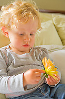 An 18 month old girl examining a flower