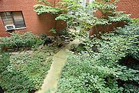 Garden at 14 Prince Street
