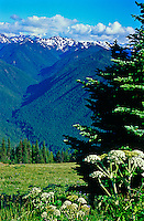 Scenic mountain vistas can be seen from all directions from Hurricane Ridge.  Olympic National Park, Washington.