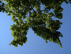 CZECH REPUBLIC PRAGUE 15JUN13 - Leafy sky at Letna, Prague.<br /> <br /> <br /> <br /> jre/Photo by Jiri Rezac<br /> <br /> <br /> <br /> &copy; Jiri Rezac 2013