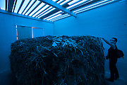 """Austrian Pavillion. Franziska & Lois Weinberger, """"Laubreise"""", 2009."""