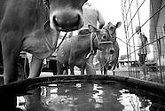 2011-7-10-Lodi Agricultural Fair