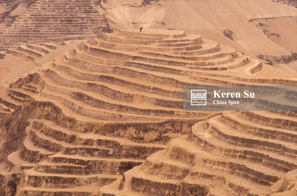 Farmer culting terraces on Loess Plateau, Yellow River (Huang He) area, Shaanxi Province, China