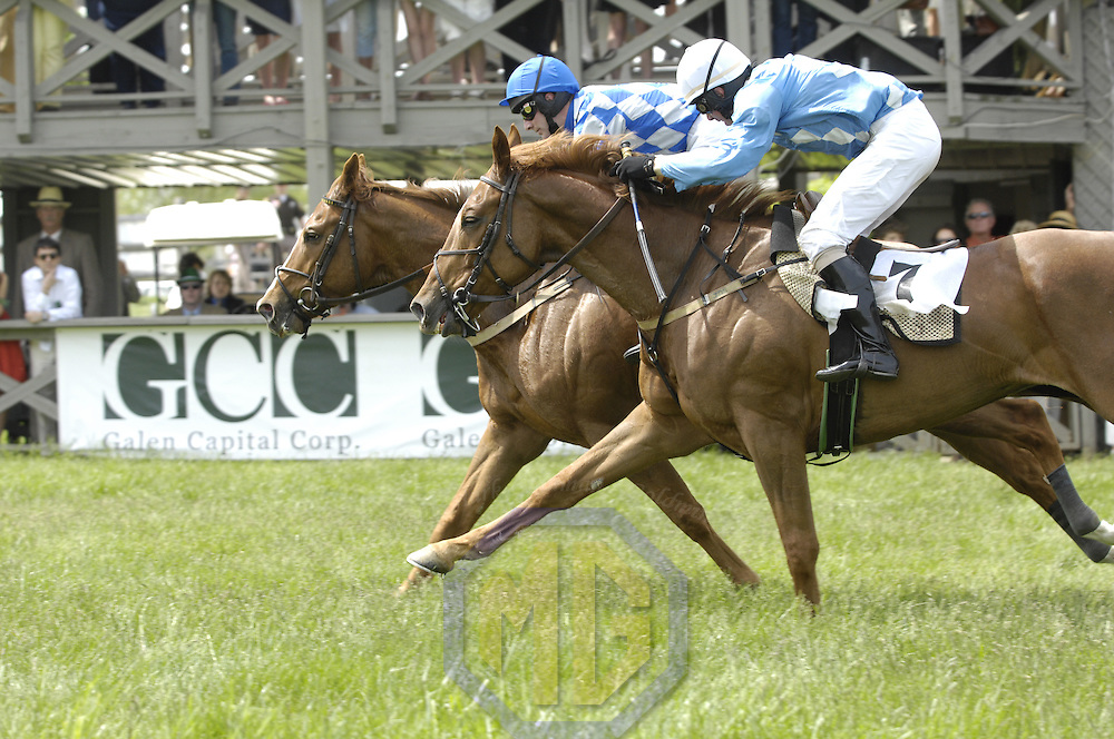 03 May 2008:  Padge Whelan aboard Be Certain (L) rides to 1st place finish ahead of James Slater aboard Lead Us Not (R) in the 3rd race in the 83rd running of the Virginia Gold Cup Races on October 20, 2007 at the Great Meadow in The Plains, Va..