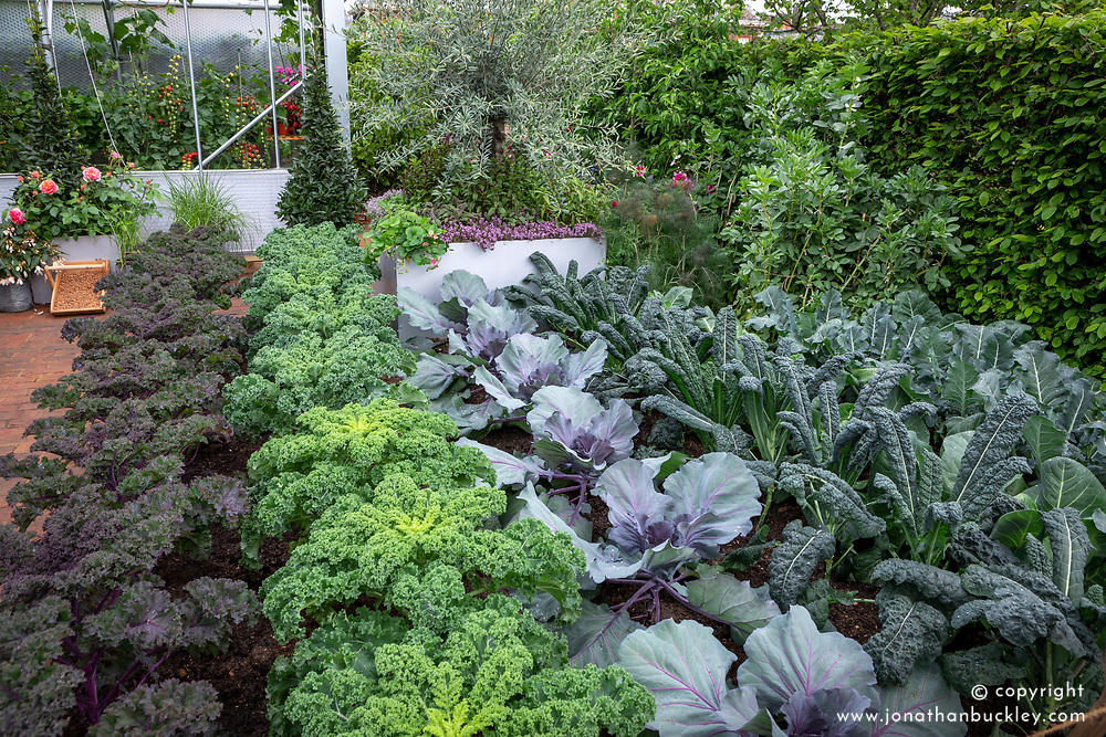 Lines of kale and cabbages in the Christ Evans Taste Garden, RHS Chelsea Flowers Show 2017. Design: John Wheatley
