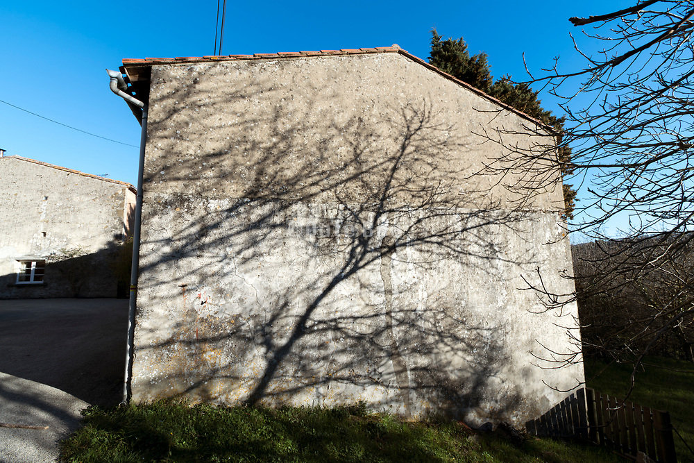 bare trees shadow on the wall of a barn France