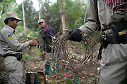 Snares, destroyed and confiscated, by rangers during a patrol. The forest rangers are employed by the Ministry of Environment but sponsored by Flora and Fauna International who pays them 75% of their salary and provides training and accommodation. They undertake regular patrols in to the Samkos Wildlife Sancturary which is part of the Cardamom Mountains Nature Reserve looking for illegal activites such as logging, poaching, land encroachment and the production of the illegal substance sassafras oil. The Cardamom Mountains and surrounding forests is the largest and most pristine area of intact forest in SE Asia. Covering an area of 2.5 million acres it became one of the last strong holds of a retreating Khmer Rouge. Their presence helped preserve the forest as no-one dared to venture inside. But with the Khmer Rouge gone, it faces new dangers from poachers, loggers and illegal drug factories. In charge of protecting this vast forest are a handful of rangers who's job it is to track down and arrest those who are helping to destroy this delicate habitat.
