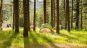 Three tents set up around pine trees with sun shining through tall trees.