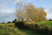Photograph of a rhyne next to the Huntspill River, between Withy and the Woolavington road, during a late afternoon in the autumn.