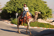 Israel, Ein Gedi, Near the Dead Sea tourists riding a camel