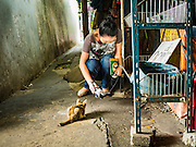 30 JULY 2016 - BANGKOK, THAILAND:  A Thai tourist photographs a feral cat in the Pom Mahakan Fort slum. Residents of the slum have been told they must leave the fort and that their community will be torn down. The community is known for fireworks, fighting cocks and bird cages. Mahakan Fort was built in 1783 during the reign of Siamese King Rama I. It was one of 14 fortresses designed to protect Bangkok from foreign invaders. Only of two are remaining, the others have been torn down. A community developed in the fort when people started building houses and moving into it during the reign of King Rama V (1868-1910). The land was expropriated by Bangkok city government in 1992, but the people living in the fort refused to move. In 2004 courts ruled against the residents and said the city could take the land. Eviction notices have been posted in the community and people given until April 30 to leave, but most residents have refused to move. Residents think Bangkok city officials will start evictions around August 15, but there has not been any official word from the city.     PHOTO BY JACK KURTZ