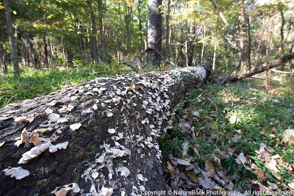 A fallen tree at Radnor Lake State Natural Area plays host to hundreds of mushrooms.