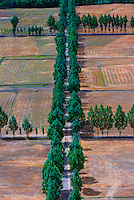 Tree lined roads, Nedong, Lhoka (Shannan) Prefecture, Tibet, China.