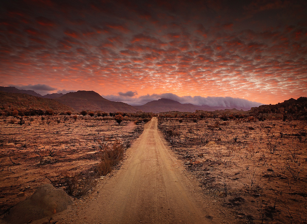 Shot after a fire close to Cederberg wine estate at Cederberg mountains, South Africa.