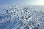 Hoarfrost covered shrubs at sunrise<br />