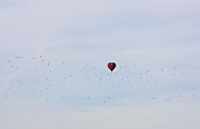 Hot air balloon and flock of Waders fly over Bourton-on-the-Water, England, United Kingdom
