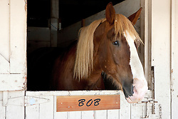 A horse named Bob in a stall at the California Mid State Fair, Paso Robles, California, United States of America
