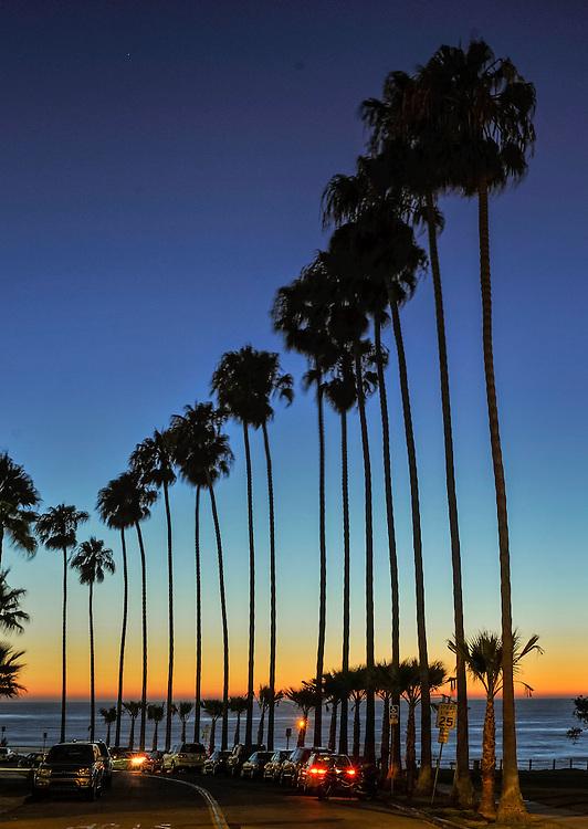 Palm Trees, Dusk, California, San Diego, La Jolla