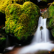 A heart shaped boulder along the cascades of a fresh water stream in the forest of Olympic National Park in Washington State.