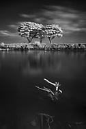 Vietnam Images-Tree-Fine art- Mekong delta hoàng thế nhiệm